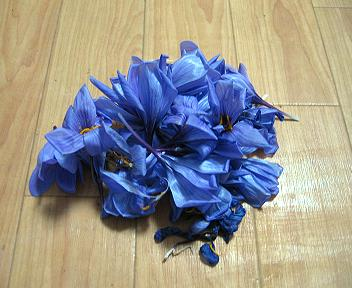 サフランの花ガラ