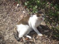 マカオでであった猫