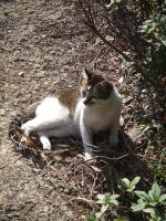 マカオで出会った猫2