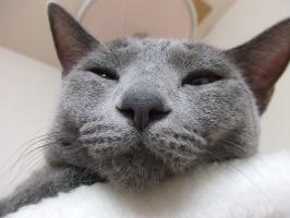 ららの寝顔