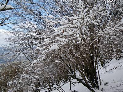 雪をのせた樹