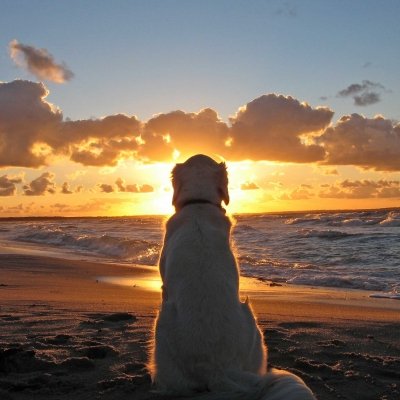 夕日を見る犬
