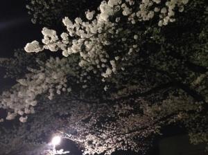 群馬県桐生市の桜