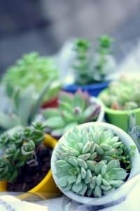 小さい多肉植物