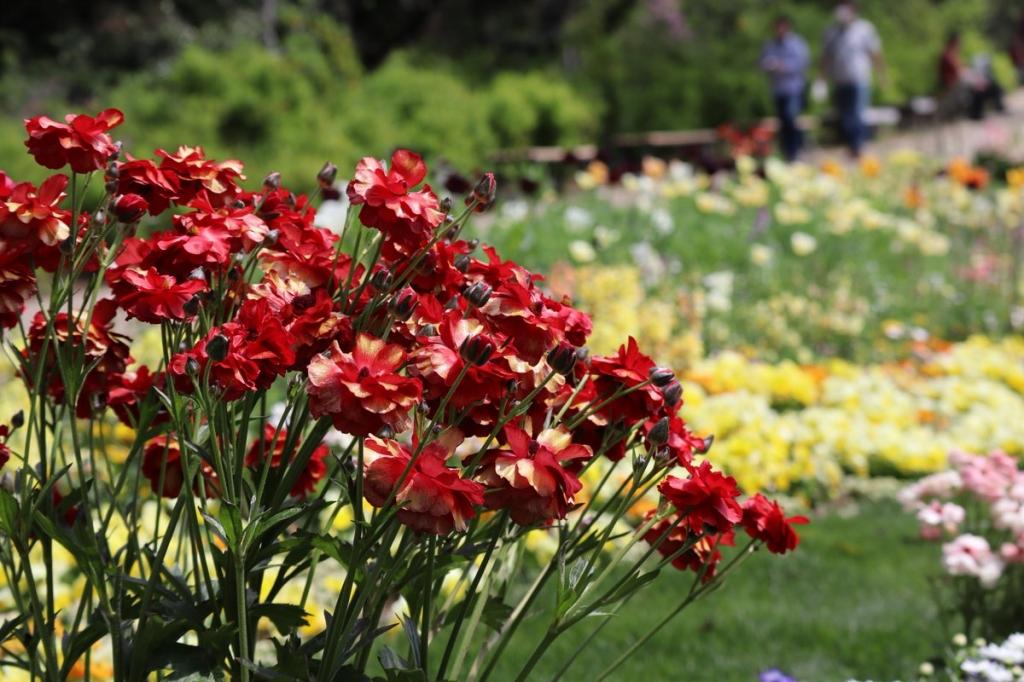 里山ガーデン花の写真