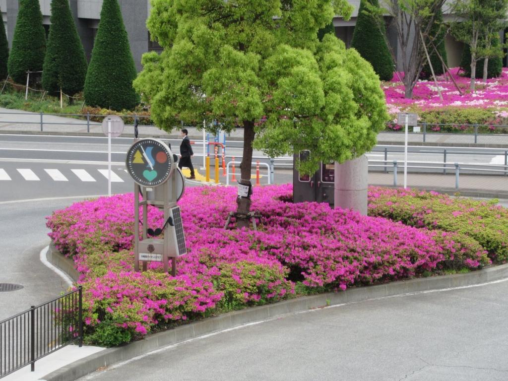 川崎駅西口のツツジ・横浜観光案内と写真