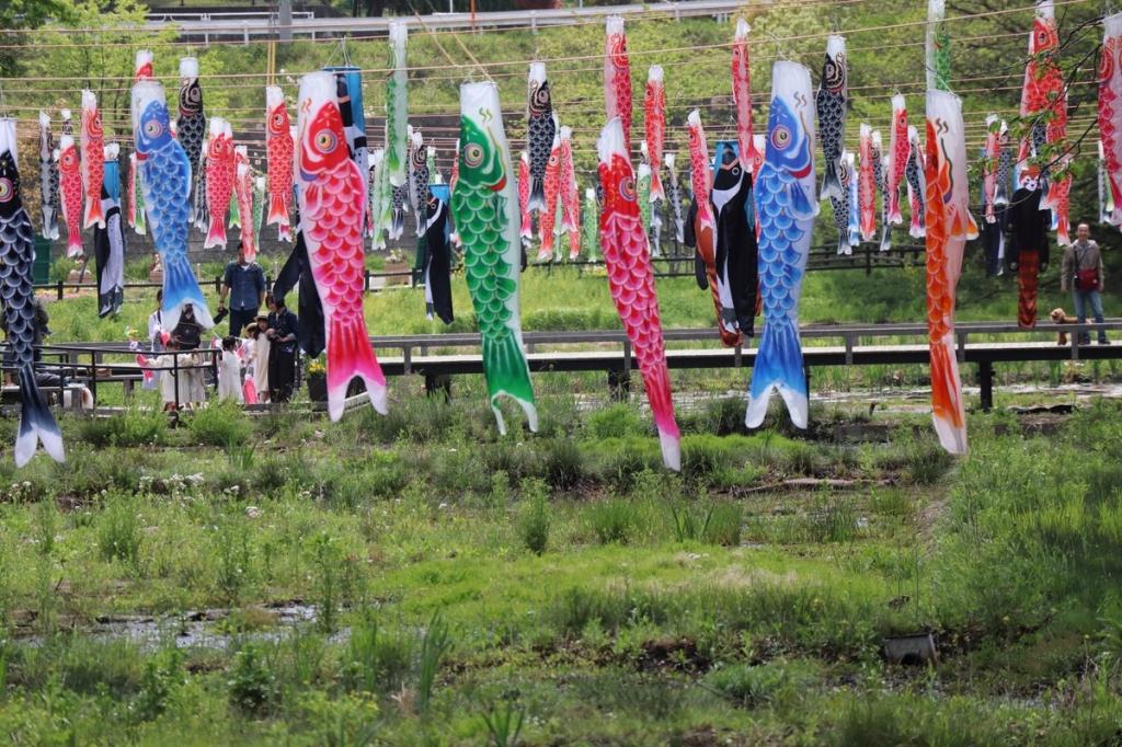 鯉のぼり2-横浜観光案内と写真・ブログ