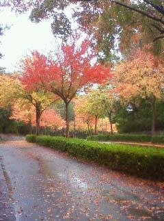紅葉散歩道1