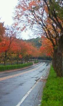 紅葉散歩道2