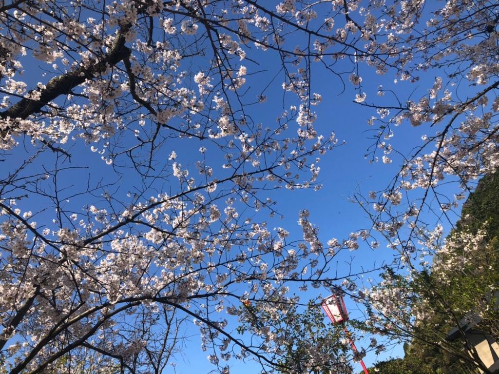 春だーーー