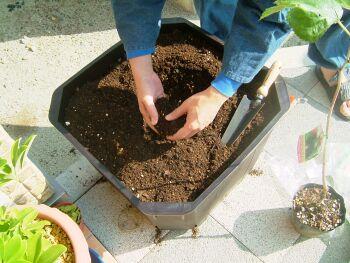鉢に土の準備