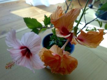 ピンクとオレンジフラミンゴ