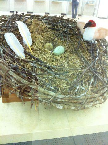 佐渡汽船に展示されている朱鷺の本物の巣