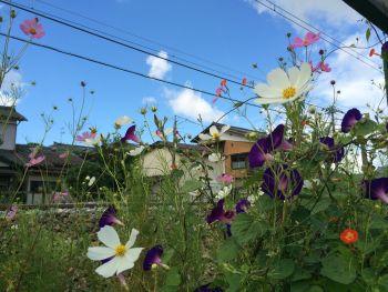 お花の競演