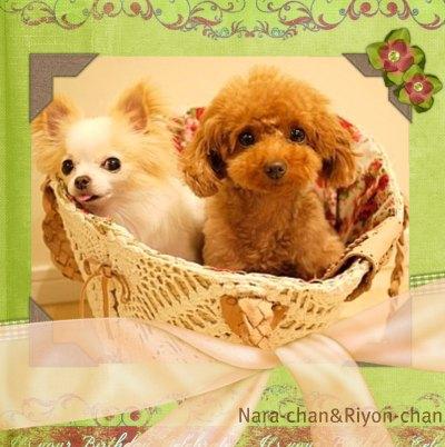 ナーラちゃん&リヨンちゃん