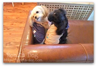 犬服の刺繍が可愛いでしょ♪