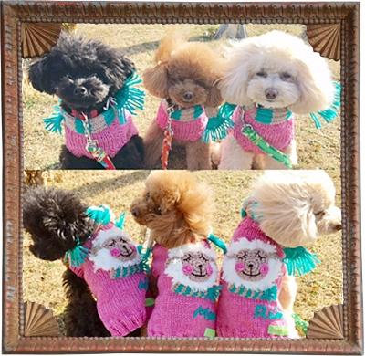 手編みお揃いセーターのワンちゃん