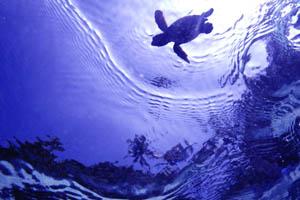 200703パラオ(水中写真)