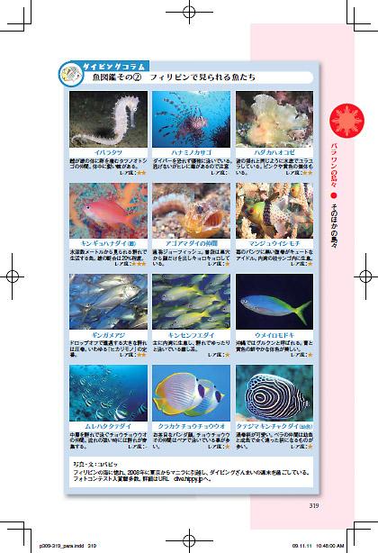 魚図鑑/フィリピンで見られる魚たち
