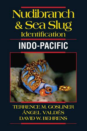 Nudibranch and Sea Slug Identification