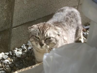 野良猫さん。