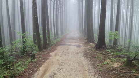 霧が出ている