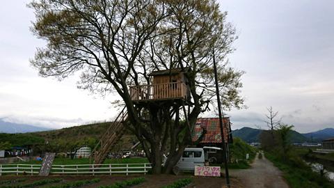 木の上の家