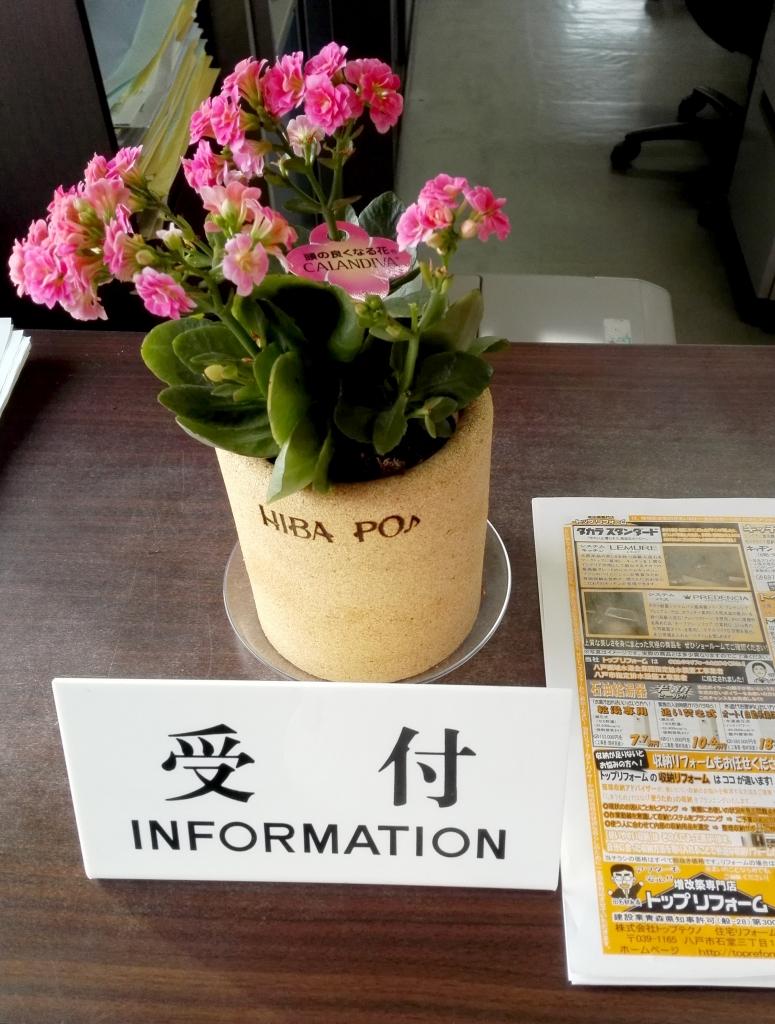 青森ひばのおがくずで作られた植木鉢でお花がイキイキ☆