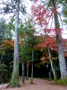 玉造神社の紅葉