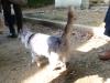 真名井遺跡の猫