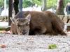 宮島の牡鹿