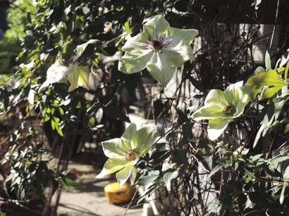 sisiyuzumama1.jpg