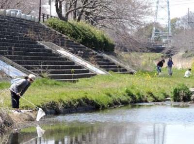 sakurahamada7.jpg
