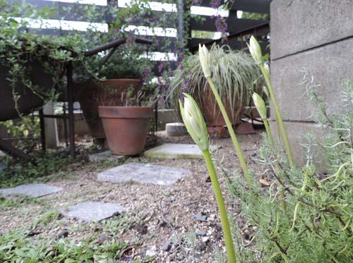 akinoasagao3.jpg