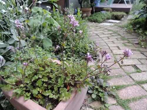 lavender4.jpg