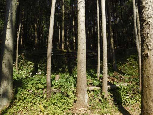 yamahohoemu3.jpg