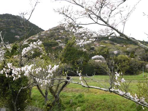 yamawarau1.jpg