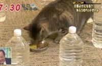 猫は水入りペットボトルが嫌いなのか検証