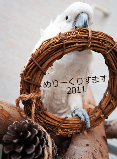 タイハクオウムのメリークリスマス