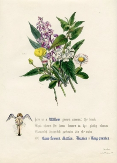 Willow, Crow Flowers, Nettles and Daisies Jane Elizabeth Giraud, The Flowers of Shakespeare, 1846