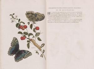 Maria Sibylla Merian (1647?1717) Metamorphosis insectorum Surinamensiam 1705