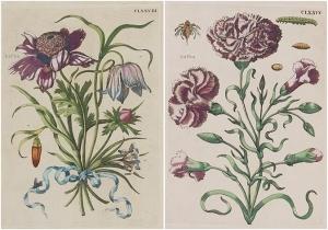 De europische Insecten. 1730  Maria Sibylla Merian