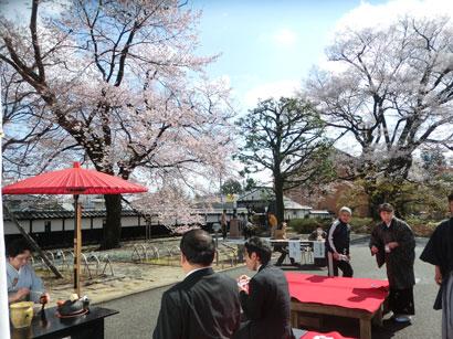 お茶席と桜と市長(後姿)