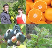 和歌山県有田の生産者