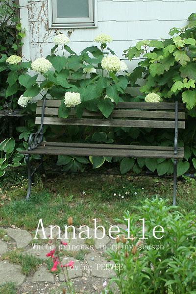 庭の白いプリンセス