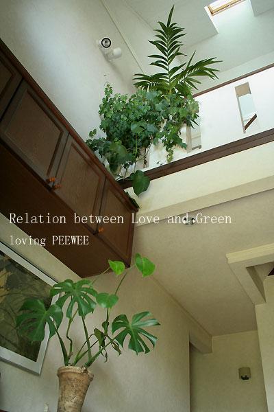 愛とグリーンの関係