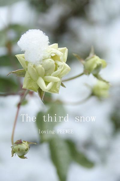 三回目の雪
