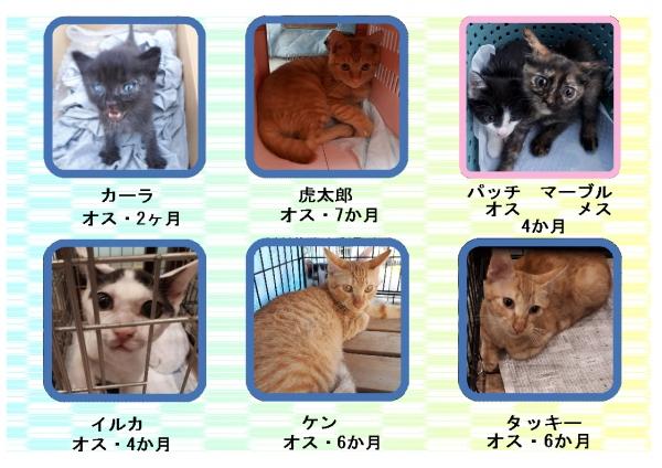 里親募集 猫2.jpg
