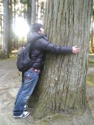 すごい太い松ノ木