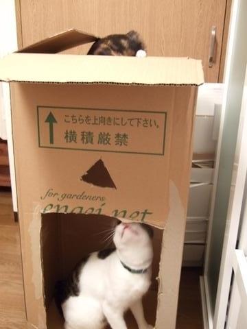 大好き箱1